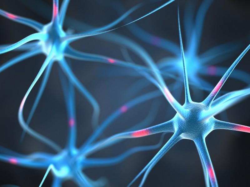 mozek_spojeni_neuron_kontakty