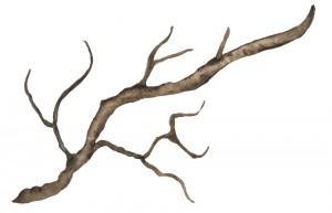 vetev_vetvicka_drevo