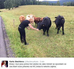 Leto_Slechtova_kravy